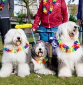 Register by Sept 4 for Festival of the Dogs on Sept 12.