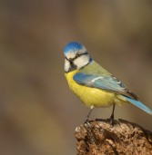 """Wilsonville Garden Club is"""" for the birds"""" at their March 10 monthly meeting"""