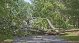 Weather Service Warns of Heavy Rains and High Winds, Watch for High Water and Downed Trees