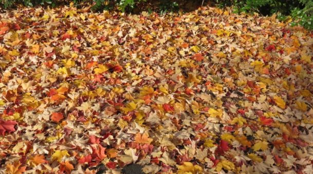 Leaf Disposal Day. Nov 18th