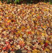 Leaf Disposal Day. Nov 18th