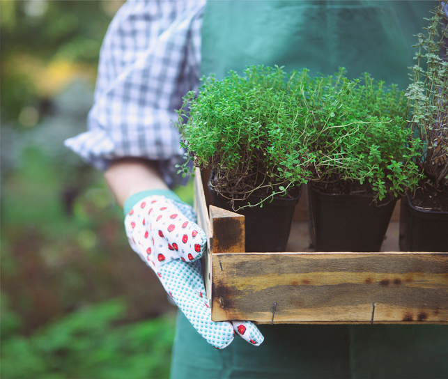 May 12, 9a – 2p. Annual Spring Plant Sale. Sponsored by the Wilsonville Garden Club.