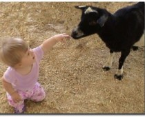 Baby Animal Petting Zoo at Lamb's.  Meet the Easter Bunny.  Mar 28th from 11am – 2pm.