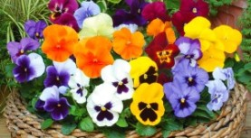 Wilsonville Garden Club.  March 6th at 10:30am.