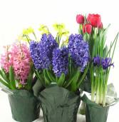 HUGE PLANT SALE – Saturday, June 2nd – 10:00-3:00