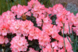 April at Wilsonville Garden Club. Tour and lunch. Apr 9 beginning at 10:30a.